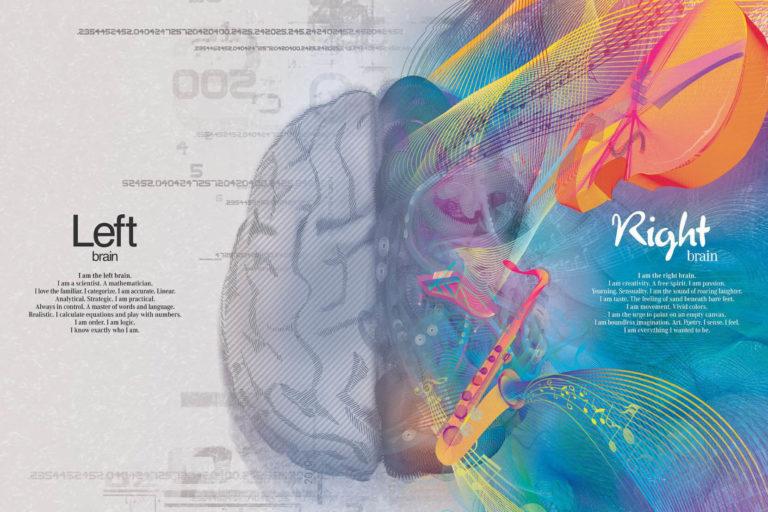 Как работают полушария головного мозга